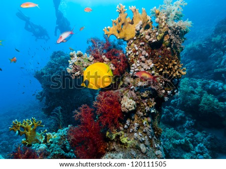 A pair of SCUBA Divers swim past a butterfly fish and colorful corals in the Ras Mohammed National Park, Egyptian Red Sea - stock photo