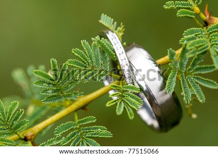 A pair of silver wedding rings hanging on an acacia tree branch - stock photo