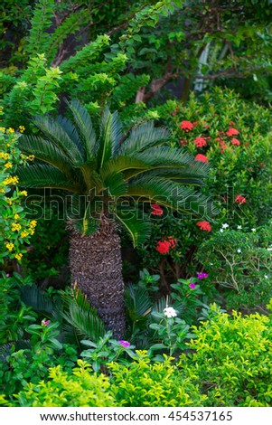 A palm and exotic plants - stock photo
