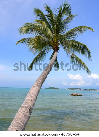 A palm tree at Ko Samui Island, Thailand - stock photo