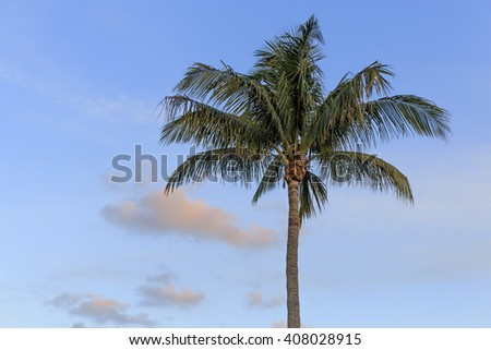 A palm tree at sunset in Florida with copy space. - stock photo