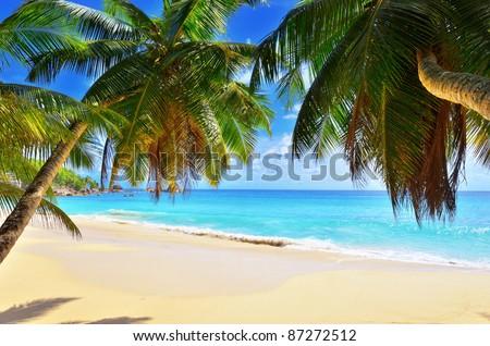 A palm tree bends over an empty sandy beach on Seychelles islands. Mahe, Anse Soleil - stock photo