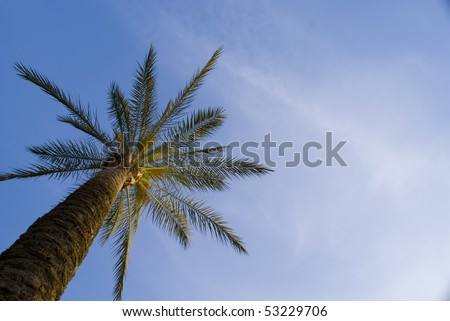 A palm tree in an interesting angle - stock photo