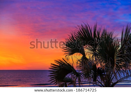 A palm tree is silhouetted by a dramatic, colorful sunrise sky over the Atlantic Ocean on a Florida beach. - stock photo
