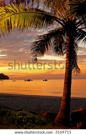 A palm-tree lit from underneath at sunset. - stock photo