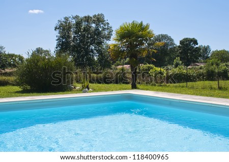 A palm tree next to a swimming pool. - stock photo