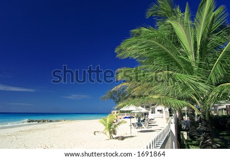a palm tree on a quiet beach in Barbados