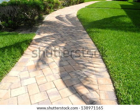 A Palm Tree Shadows the Walkway