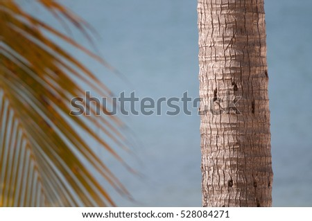 A palm tree stands in front of the ocean with a palm branch visible
