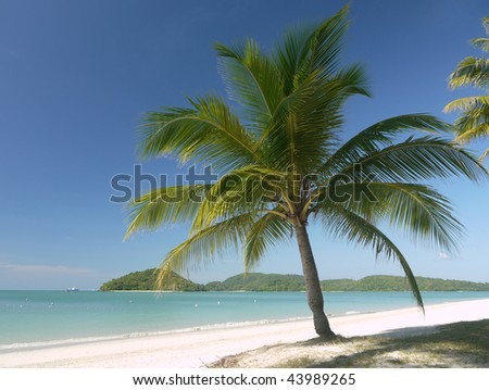 A palmtree on a tropical beach at Langkawi Island, Malaysia - stock photo