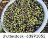 A pan of freshly picked Palestinian olives. - stock photo