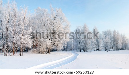 A Panorama of frosty day in the winter forest. - stock photo