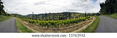 A panoramic image of a vineyard in the Cote du Rhone region in the Drome en Provence, France
