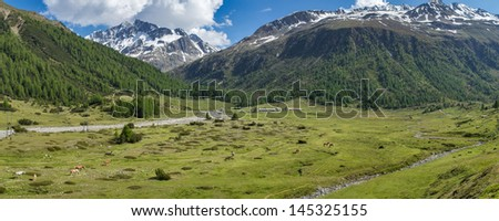 a panoramic view of grassy plane with horses in the Italian alps near Livigno