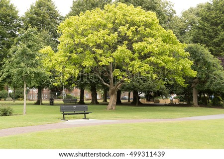 A park bench and tree in the public gardens in Alton town park in Hampshire.