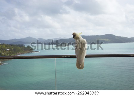a parrot standing on balcony facing Whitsundays - stock photo
