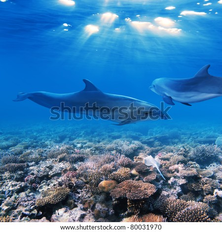 A part of flock of playful dolphins swimming underwater over beautiful coral reef - stock photo