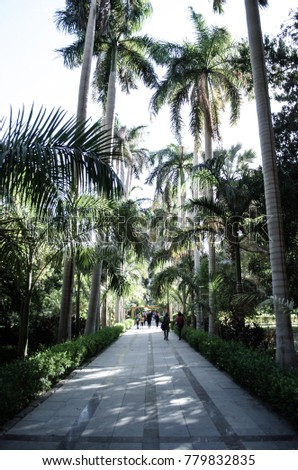 a passage way surrounded by palm trees