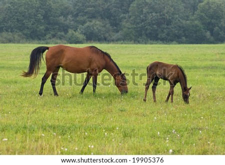 A pasturing brown horse and her foal