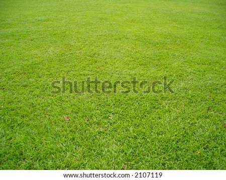 a patch of green field good for background texture copyspace.