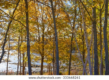 A patch of trees with late fall colors in the foreground with shore and coastline in the background during late autumn in Maine.