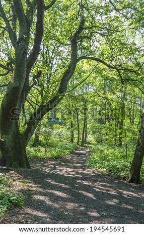 A path between green trees in the summer  forest - stock photo