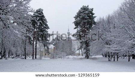 A path between trees covered with snow, Frombork - stock photo