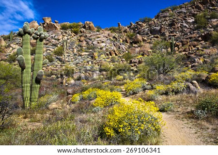 A path by the flowering bushes and desert foliage toward the boulder strewn mountain - stock photo