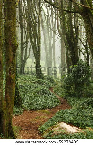 A path in a green forest trees with rocks - stock photo