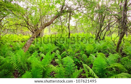 a path leading into a green forest - stock photo