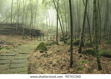 a path through a green bamboo forest in morning sunlight