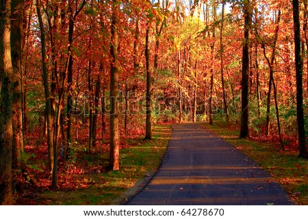 a path through the woods with fall leaves - stock photo