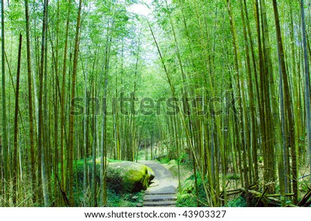 a pathway in the bamboo forests