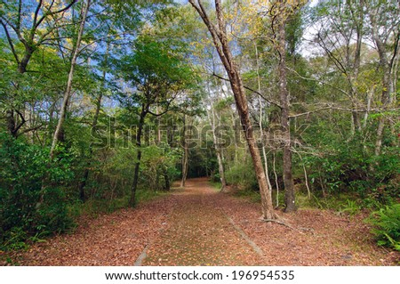 A pathway is leading through a grove of trees. - stock photo