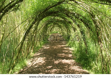 A Pathway Through a Tunnel of Willow Tree Arches. - stock photo