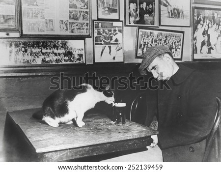 A patron of 'Sammy's Bowery Follies', a downtown bar, sleeping at his table while the resident cat laps at his beer. Dec. 1947. - stock photo