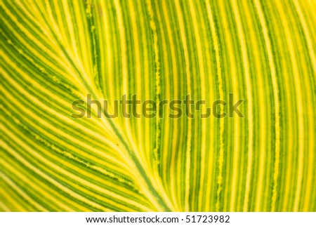 A pattern of leaf rib - nature background