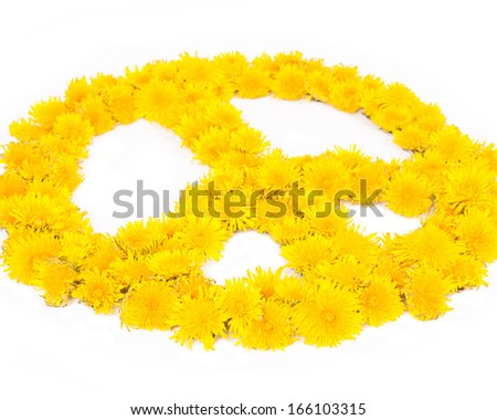 A peace symbol made from many fresh yellow dandelion flowers against a white background. - stock photo
