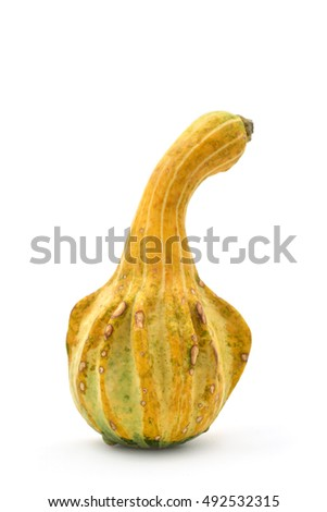 a peculiar long pumpkin on a white background