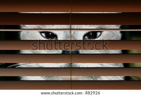A 'peeping Tom' cat observing through a window. - stock photo