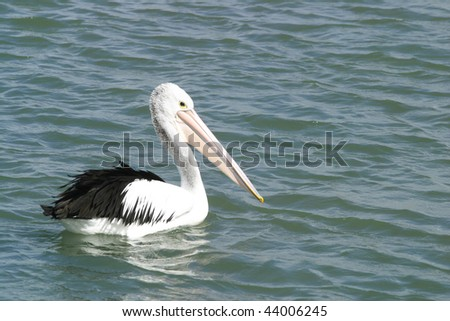 A pelican by the sea