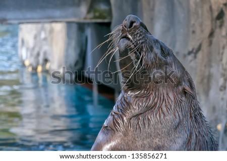A pelican close up portrait - stock photo