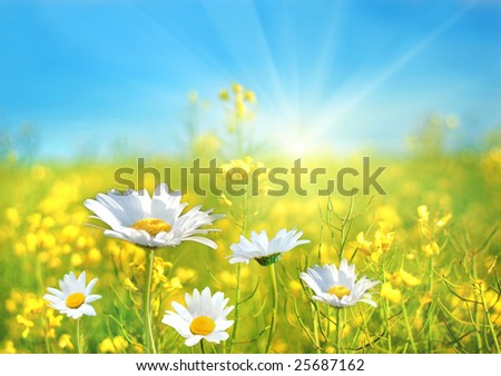 A perfect day - stock photo