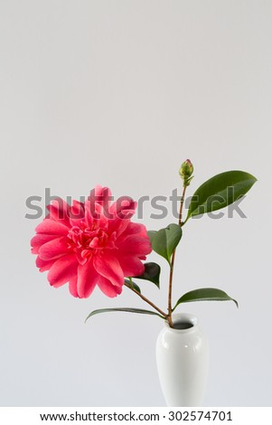 A perfect, pink camellia sits gracefully in a white vase. A lovely photo for greeting cards, birthdays, magazines, gardening, decoration, or many other creative ideas or concepts.  - stock photo