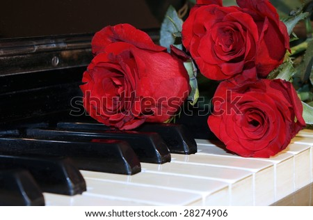 A perfect red rose on top of a grand piano keys.