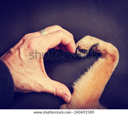 a person and a dog making a heart shape with the hand and paw toned with a retro vintage instagram filter effect app or action - stock photo