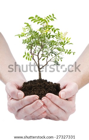 a person holding a small bonsai plant isolated - stock photo