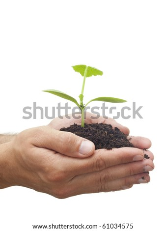 A person holding a small plant