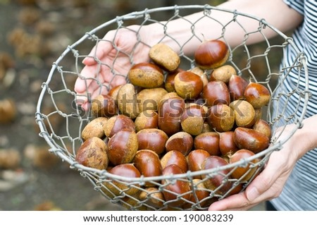 A person is holding a metal basket with a variety of nuts in it. - stock photo