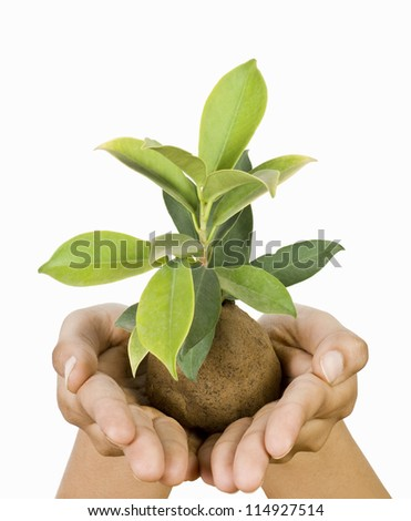 A person's hand holding a sapling